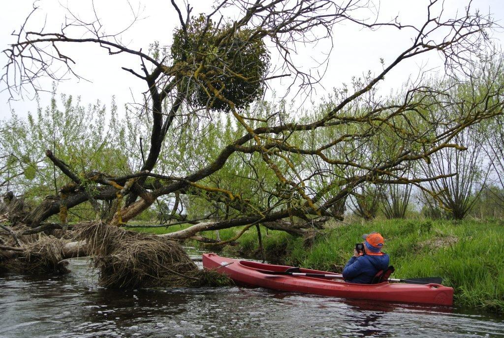 Zwałka na rzece Hanka. Zdjęcie zrobione podczas wiosennego spływu z Holeszowa do Sławatycz. Kajaki Kuzawka