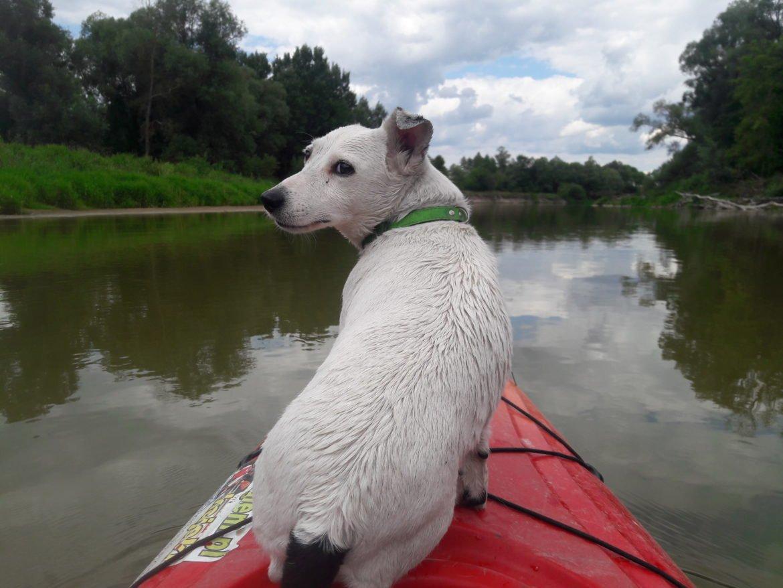 Spływy kajakowe we Włodawie, wypożyczalnia kajaków we Włodawie, kajaki Włodawa, spływ do Włodawy