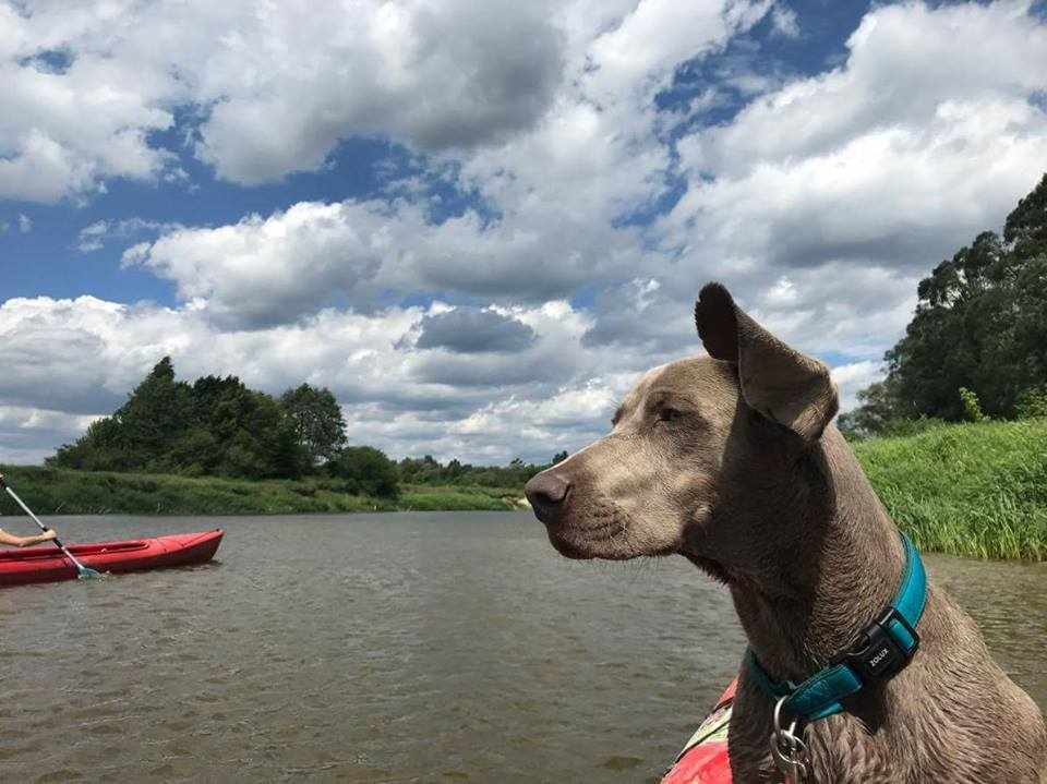 Pies w kajaku, kajakowanie z psem, spływ z pazurem