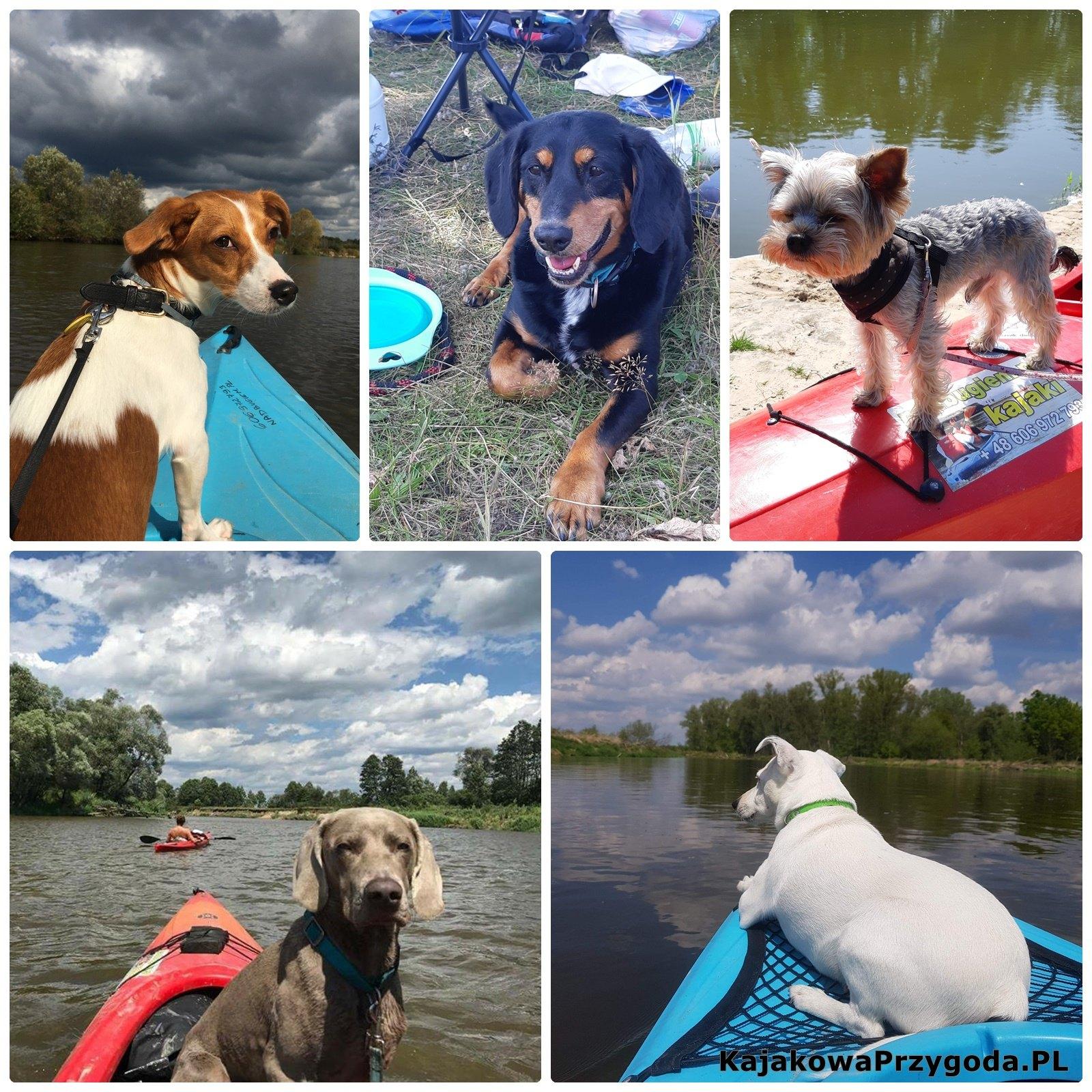pies w kajaku, psia przygoda nad rzeką, psy w kajaku